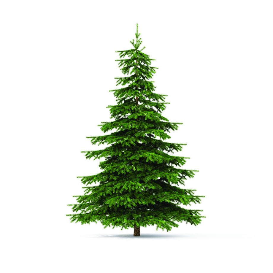Christmas Tree Pick Up.Live Holiday Greenery Pickup Service Owasso Ok Official